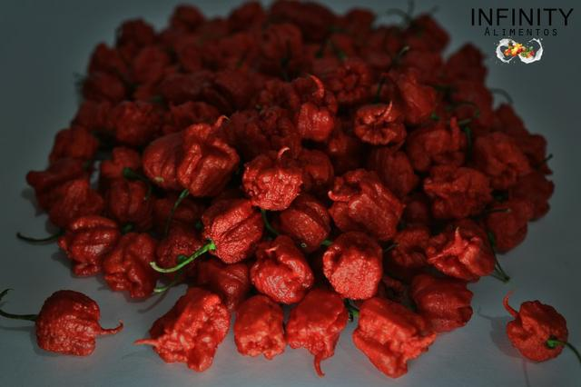 Carolina Reaper a pimenta mais ardida do mundo! - Foto 4