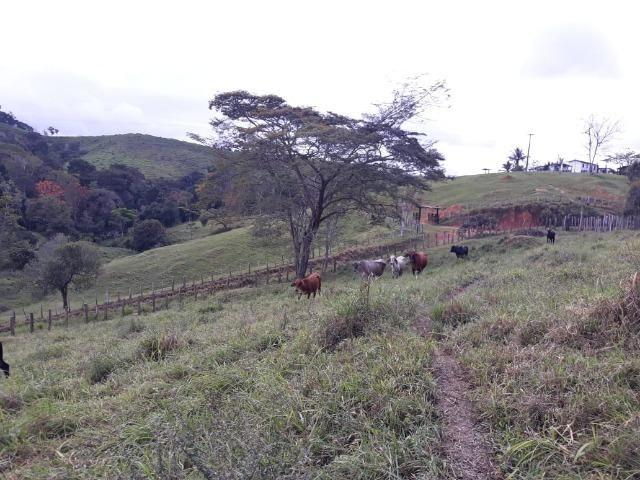 Fazenda de Pecuária - Foto 9