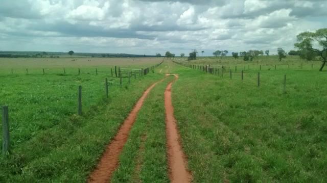 Fazenda. no Ms p Arrendamento de Lavouras 2650 há Show de Bola - Foto 13