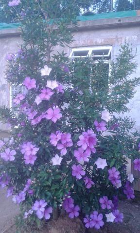 Casa em espera feliz mg wathsap - Foto 3