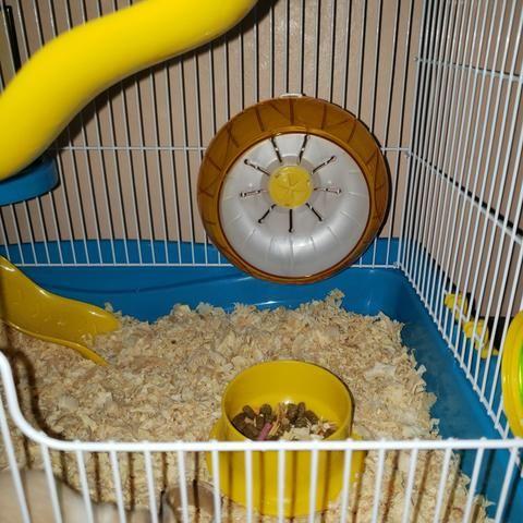 Rodinha para hamster 13 cm
