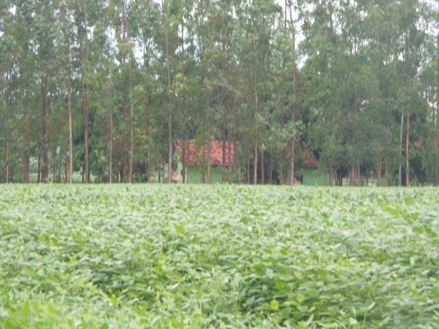 Fazenda 3.771 Hectares Plantando Lavoura - Canarana - MT - Foto 8