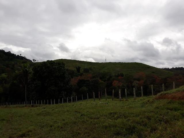 Fazenda de Pecuária - Foto 13