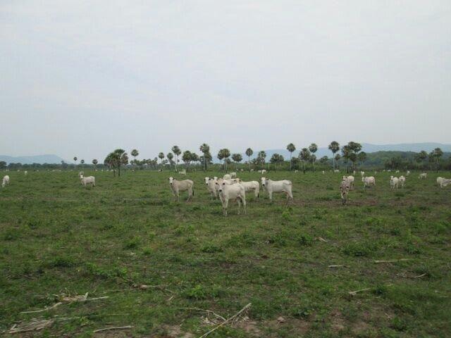 Fazenda. no Ms p Arrendamento de Lavouras 2650 há Show de Bola - Foto 8