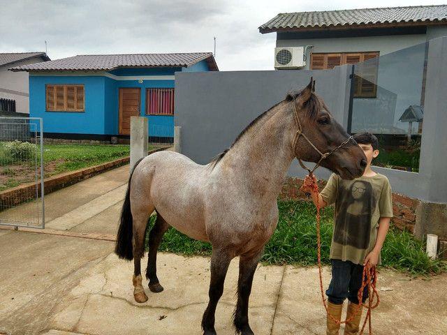 Cavalo crioulo top de laço - Foto 5
