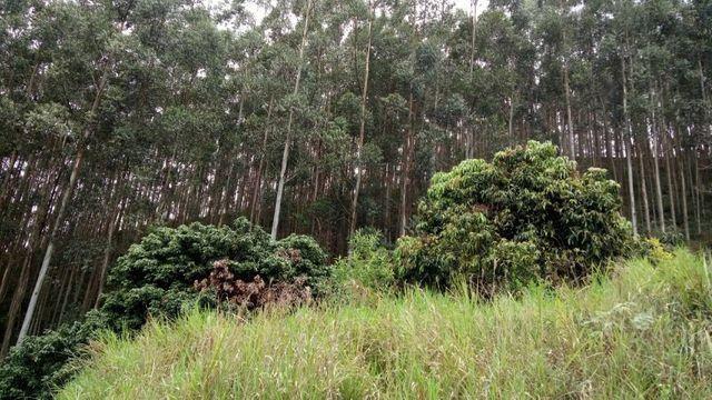 Fazenda com 566 hectares com 400.000 pés de eucaliptos - Foto 9