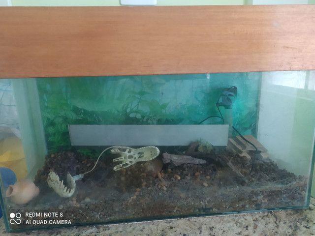Vendo aquário completo com tampo de madeira - Foto 5