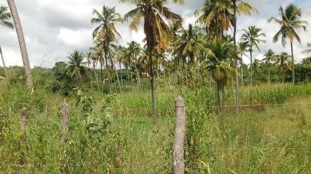 Excelente propriedade de 9.5 hectares, rica em água, em Glória do Goitá-PE - Foto 4