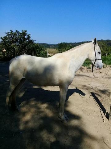 Égua mangá larga