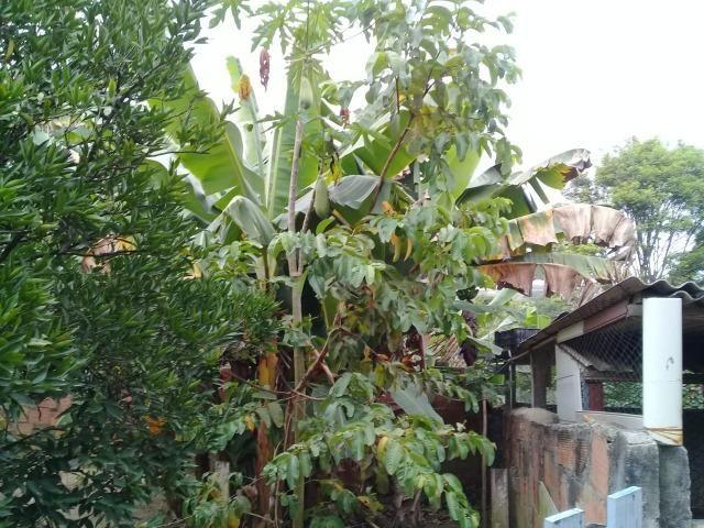 Pequeno sítio de 720 m2, todo plantado em Itambi - Foto 7