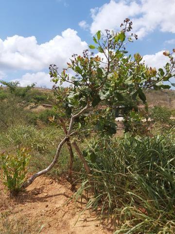 Sítio 2 héctares em Pombos - Foto 16
