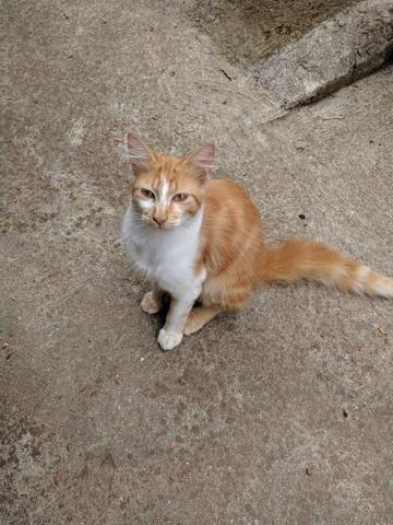 Gatos Doação - Foto 2