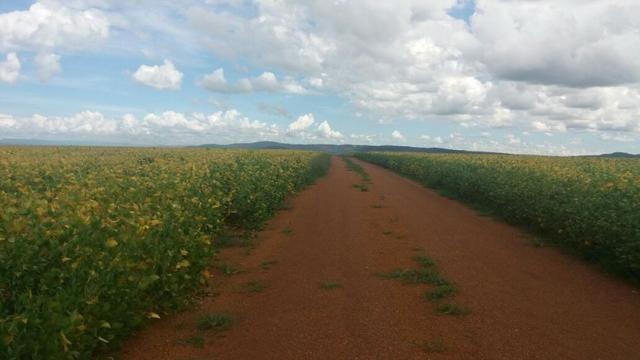 Fazenda à venda: 130 km de Brasília - DF, 1.683 hectares - R$ 40.000.000,00 - Foto 10