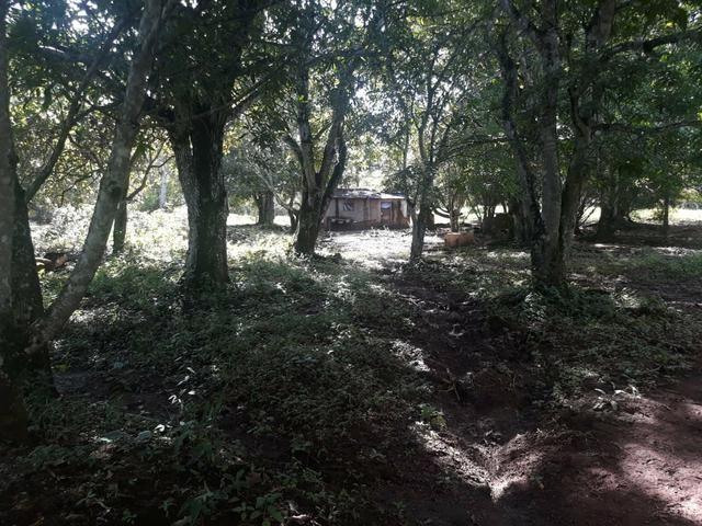 Vendo Chácara Escriturada de 2 hectares na Região do Novo Gama à 10 minutos do Lago Azul - Foto 11