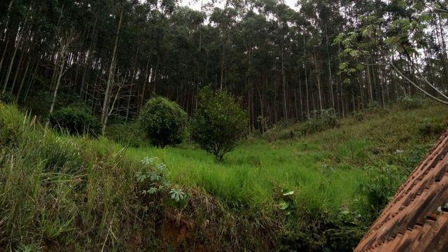Fazenda com 566 hectares com 400.000 pés de eucaliptos - Foto 19