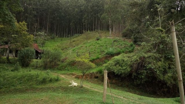 Fazenda com 566 hectares com 400.000 pés de eucaliptos - Foto 11