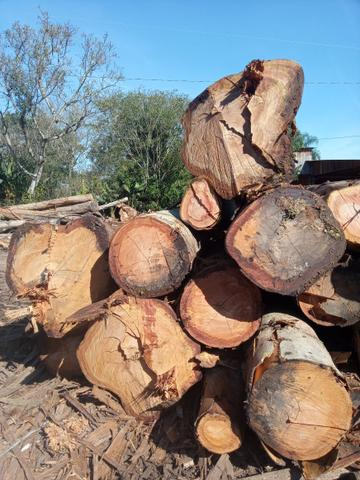 Madeira serrada de eucalipto - Foto 4