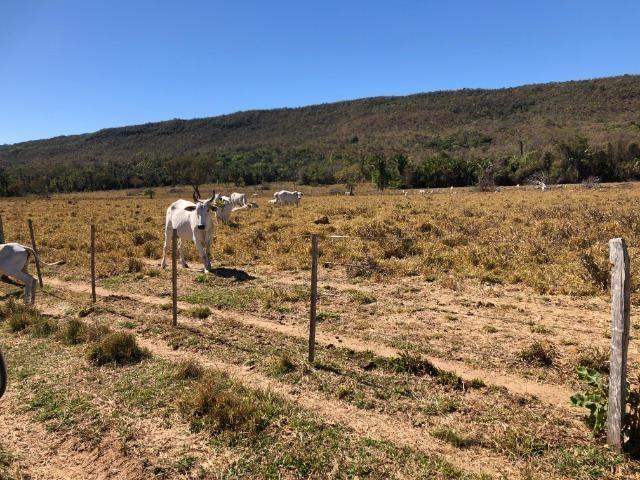 Galinha Morta, 1200 Hectares,500 Reses,Trator, porteira Fechada, Alto Paraguai ?MT - Foto 4