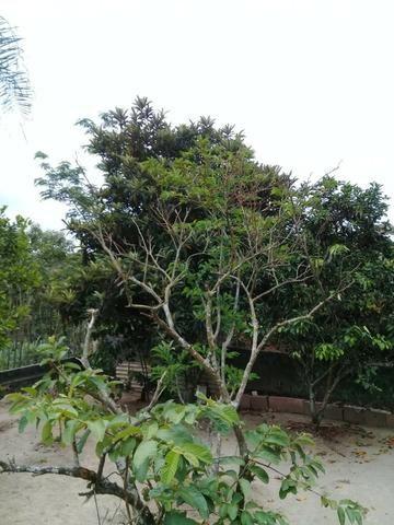 Pequeno sítio de 720 m2, todo plantado em Itambi - Foto 10