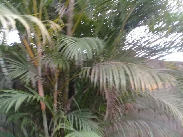 Pequeno sítio de 720 m2, todo plantado em Itambi - Foto 9