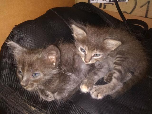 Doação gatinhos - Foto 2