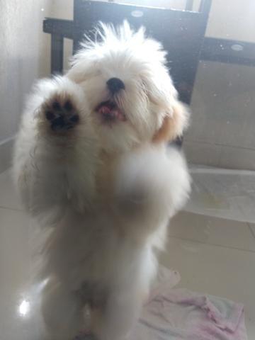 Cãozinho - Foto 3