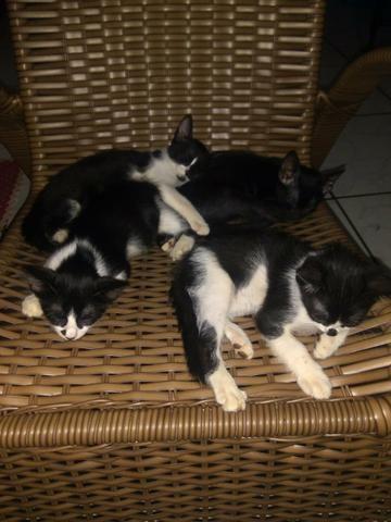 Doação de gatinhos - Foto 5