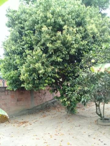 Pequeno sítio de 720 m2, todo plantado em Itambi - Foto 13