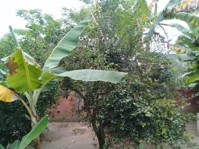 Pequeno sítio de 720 m2, todo plantado em Itambi - Foto 20