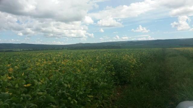 Fazenda à venda: 130 km de Brasília - DF, 1.683 hectares - R$ 40.000.000,00 - Foto 7