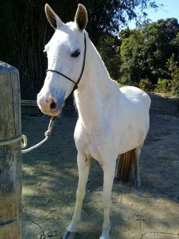 Égua mangá larga - Foto 2