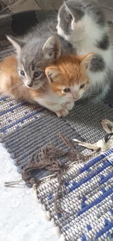 Doa-se lindos gatinho - Foto 4