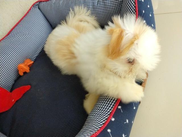 Cãozinho - Foto 4