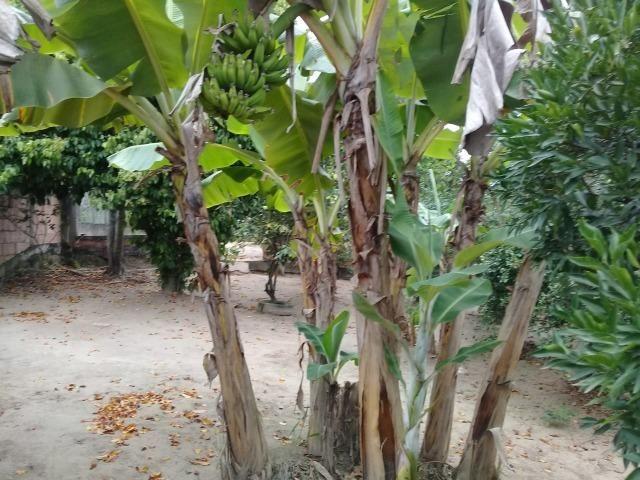 Pequeno sítio de 720 m2, todo plantado em Itambi - Foto 4