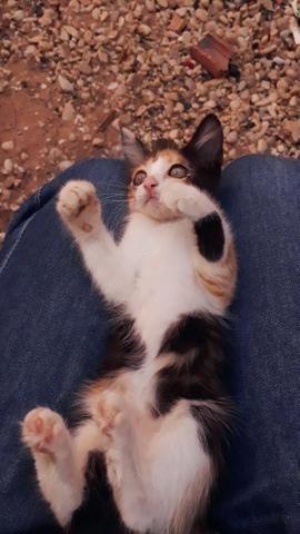 Adotar gatinhos - Foto 2
