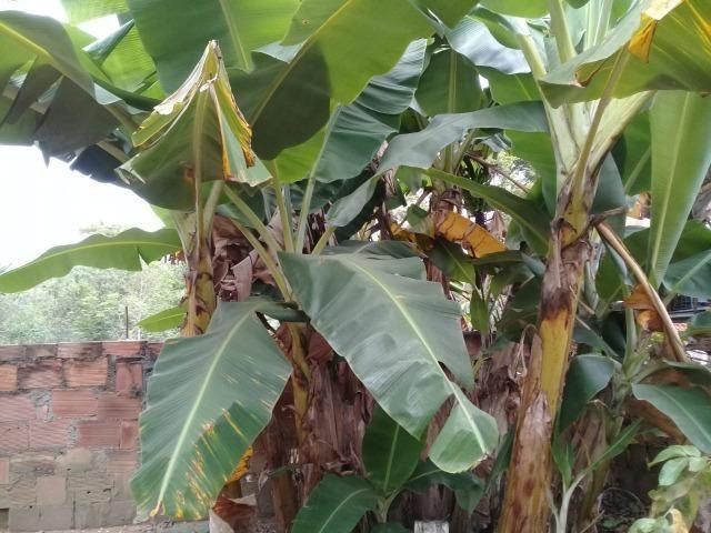 Pequeno sítio de 720 m2, todo plantado em Itambi - Foto 14