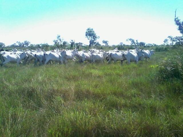 Fazenda em Luciara, MT - Foto 7