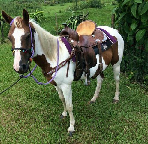 Égua Paint Horse - Foto 2