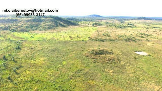 Fazenda nordeste mt 344 hectares nikolaiimoveis