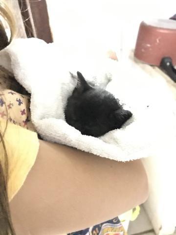 Gatinho filhote para adoção responsável - Foto 3