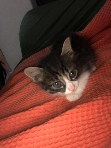 Gatinhos para adoção - Foto 2