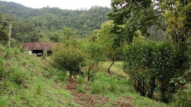 Fazenda com 566 hectares com 400.000 pés de eucaliptos - Foto 5