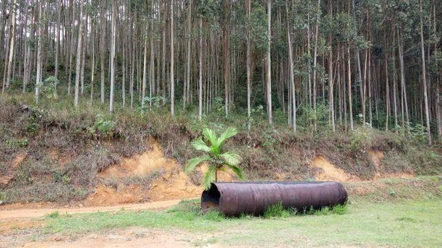 Fazenda com 566 hectares com 400.000 pés de eucaliptos - Foto 15