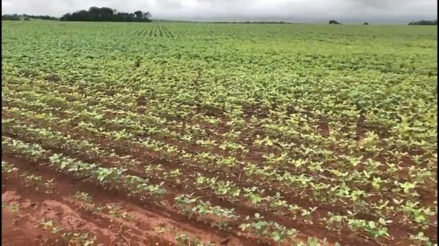 Fazenda de soja plantando á venda em Nobres MT - Foto 7