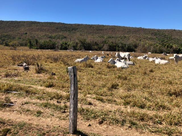 Galinha Morta, 1200 Hectares,500 Reses,Trator, porteira Fechada, Alto Paraguai ?MT - Foto 5