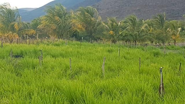 Sítio Irrigado Próximo ao Centro de Jequié com 40.000 m2 - Foto 8