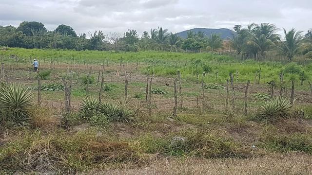 Sítio Irrigado Próximo ao Centro de Jequié com 40.000 m2 - Foto 17