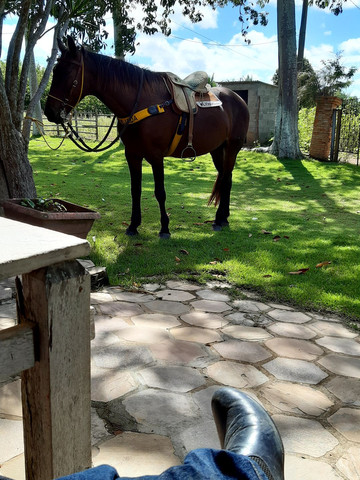Cavalo Meio Sangue - Foto 5