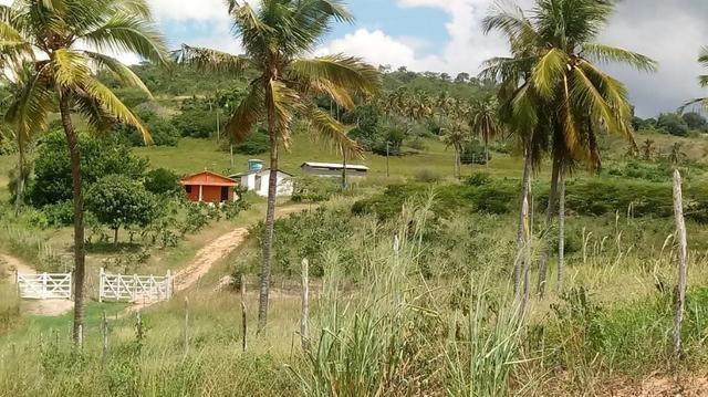 Excelente propriedade de 9.5 hectares, rica em água, em Glória do Goitá-PE - Foto 2