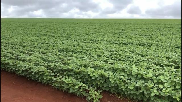 Fazenda de soja plantando á venda em Nobres MT - Foto 6